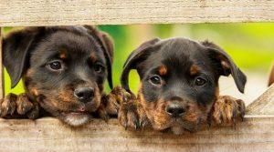 Aprende a elegir tu perro ideal