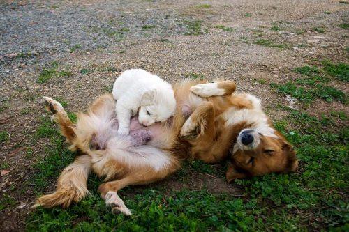 Cachorro de raza o mestizo