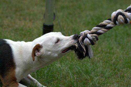 Cachorro muerde mucho