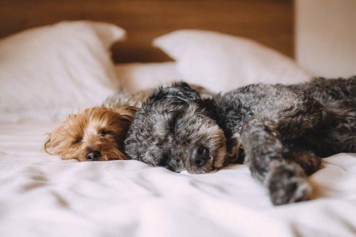 Cuánto debe dormir un cachorro