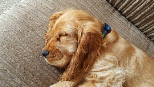 Cuánto duerme un perro