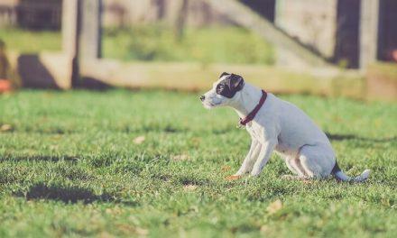 Enseña a tu cachorro a hacer sus necesidades en la calle