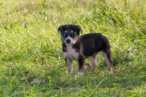 Enseñar perro a hacer necesidades en la calle