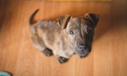 ¿Tu perro se come sus excrementos? Descubre las razones de la coprofagia
