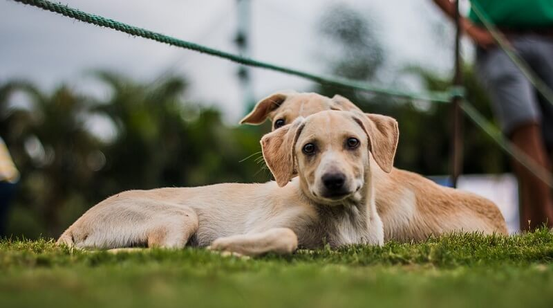 ¿Perro macho o hembra? Decide cuál elegir