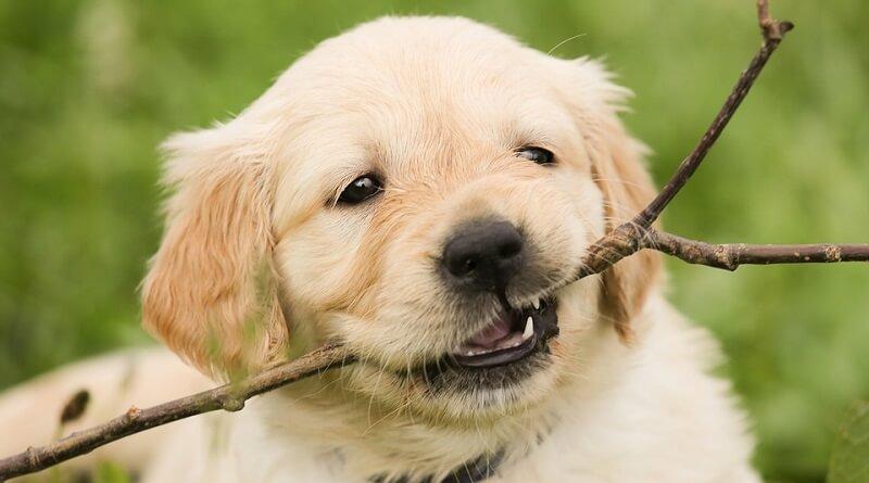 Preparar la casa para la llegada de un cachorro