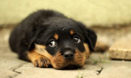 Qué hacer si tu cachorro llora por la noche