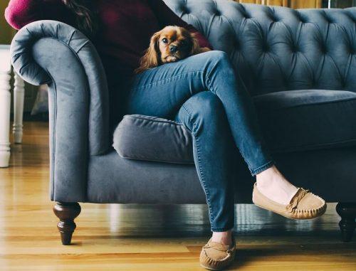 Perro hiperapego