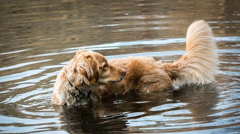 Por qué los perros se muerden su cola