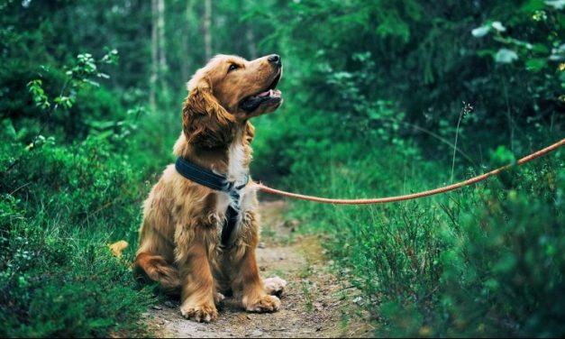 Cuánto tarda un perro en aprender a hacer sus necesidades fuera de casa