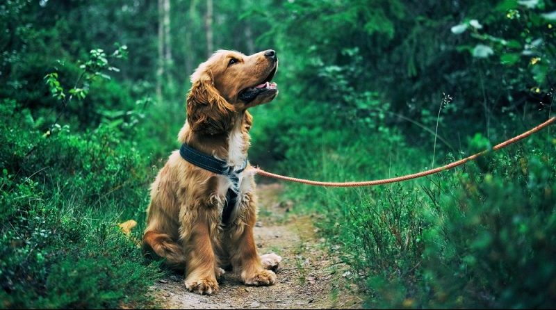 Cuánto tarda un perro en aprender a hacer sus necesidades