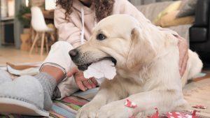 Cómo cansar a un perro en casa