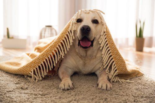 jugar al escondite con tu perro