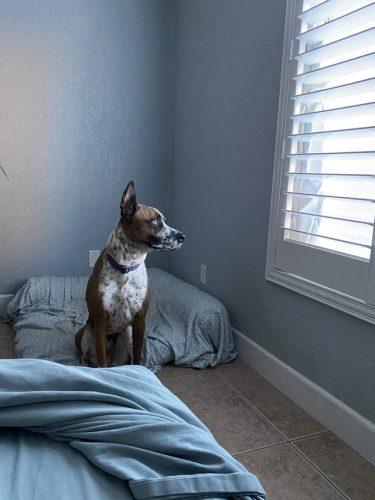 perro esperando en casa