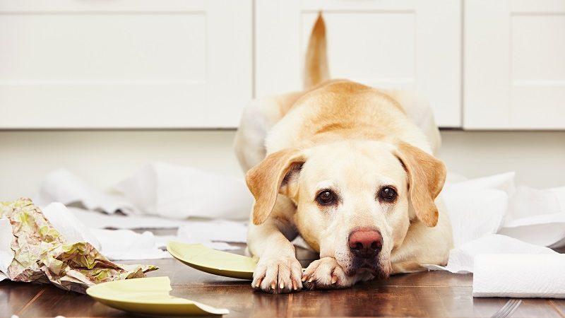 Problemas de comportamiento de los perros