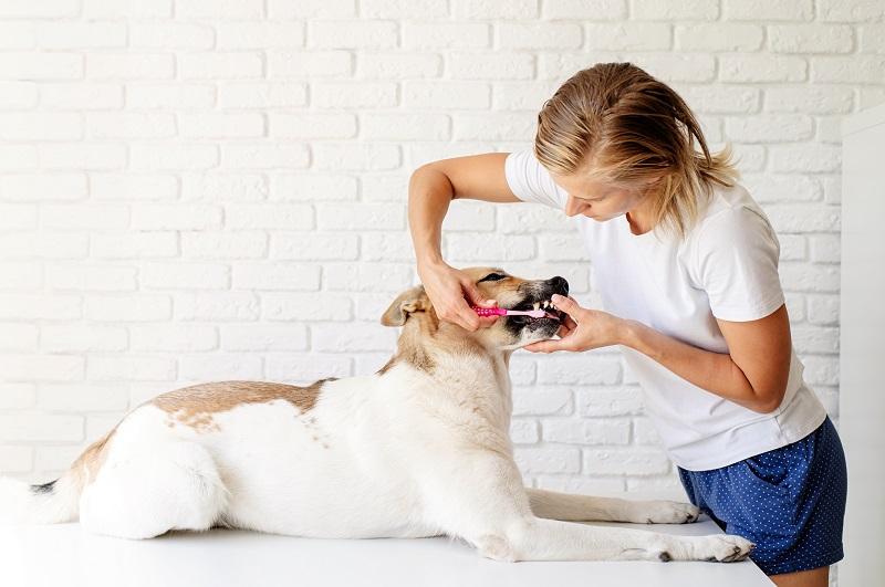 Cepillos de dientes para perros